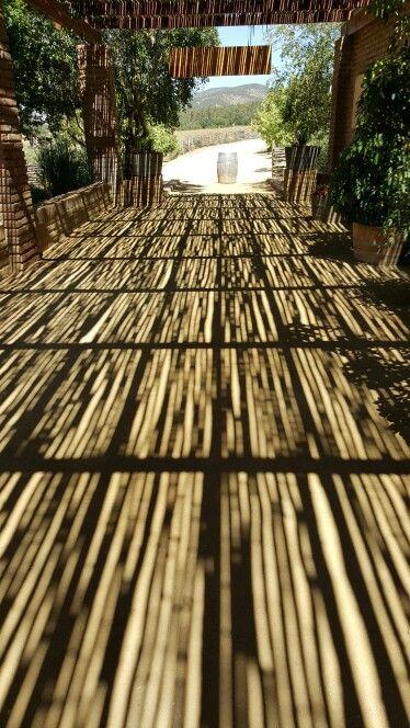 Sombras en Viña Matetic
