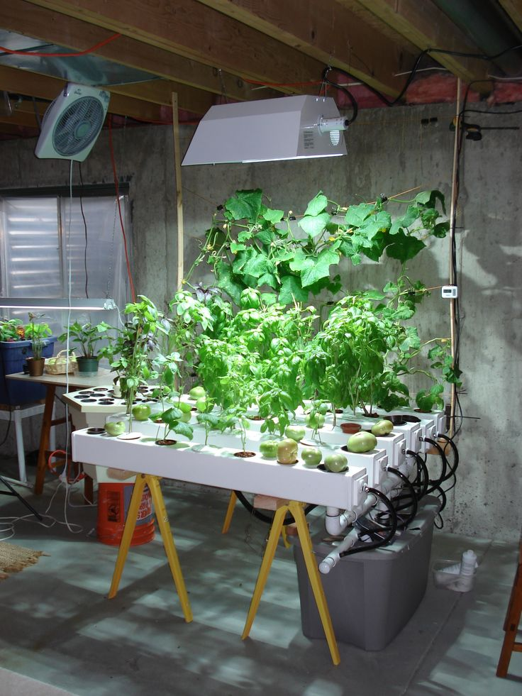 Indoor Hydroponic Garden Under HID Metal Halide Plant Grow Light.