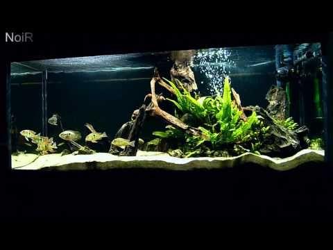 119 best images about aqu rios aquarium on pinterest for Amazon aquarium fish