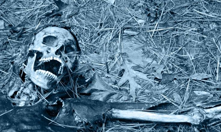 Life after death: the science of human decomposition