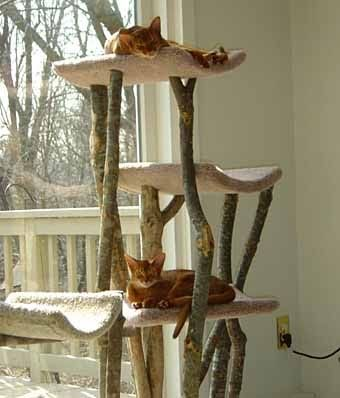 домик когтеточка для кошки своими руками идеи
