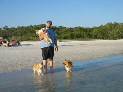 2012 entry as seen here at http://www.family-getaways-melbourne.com/my-corgi-clan-at-dog-beach-lovers-key-state-park-bonita-springs-florida.html