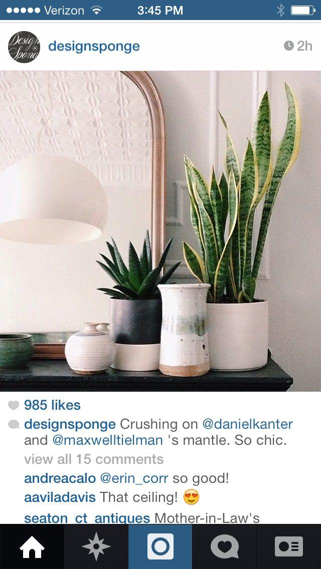 Plants on mantle.