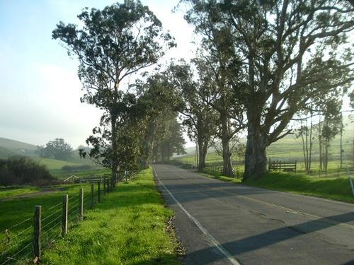 Sonoma County Backroads near Tomales