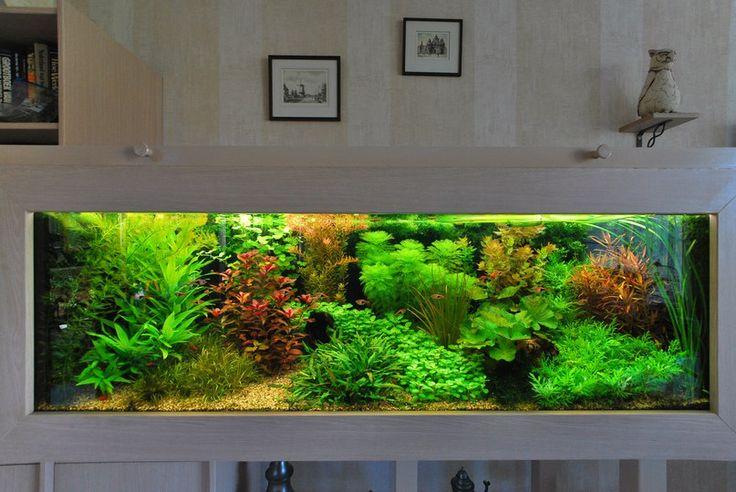 Живая Вода - аквариум, террариум, пруд