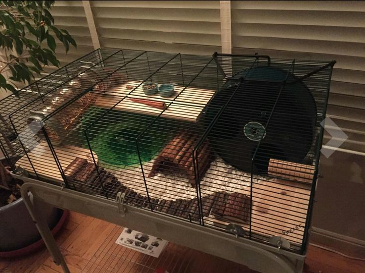 Great cage setup for a Syrian Hamster