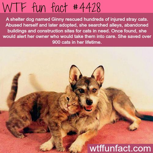 Shelter dog rescued over 900 cats -   WTF fun facts #dog #rescue #cat                                                                                                                                                                                 More