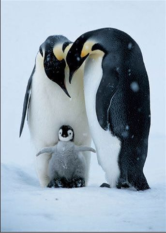 National Geographic. The first thing that comes to this Mom of Six's mind is Happy Feet.