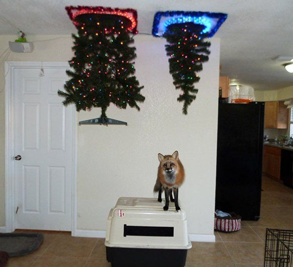 Dogs and cats will not be ruining these Christmas trees – 30 Pics