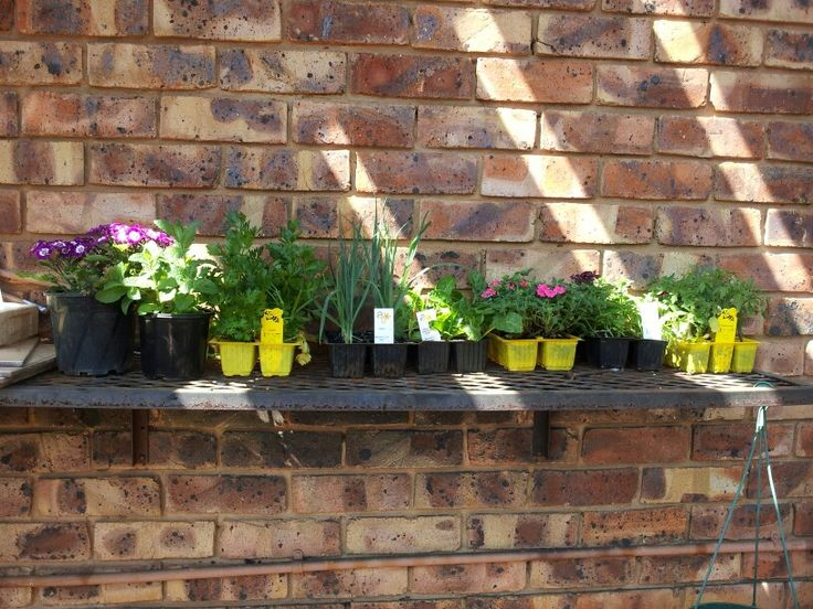 A few store bought seedlings for the veggie patch and some flowers to brighten up the garden.