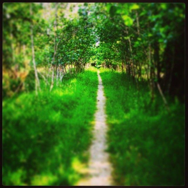 Walking in the woods. Wicklow, Ireland. #summertime