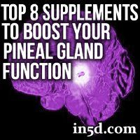 Below is a list of 8 supplements that will boost your pineal gland function, help in its decalcification, and support you on your journey of personal and spiritual cultivation.