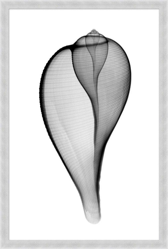 「貝 モチーフ アート -ネイル 巻貝 黄金率」の画像検索結果