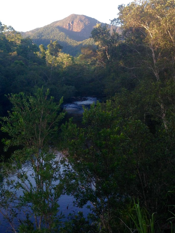 Abergowrie State Forest, North Queensland