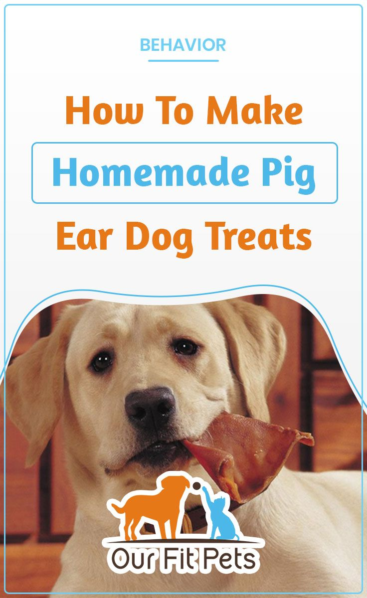 How To Make Homemade Pig Ear Dog Treats Dogs Dog Obedience
