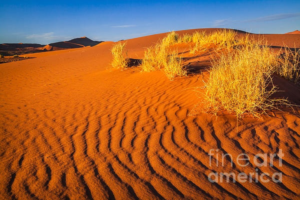 Famous orange sand dunes in Soussusvlei in Namibia, Africa, taken at sunset on the way from Dead Vlei back to the car.