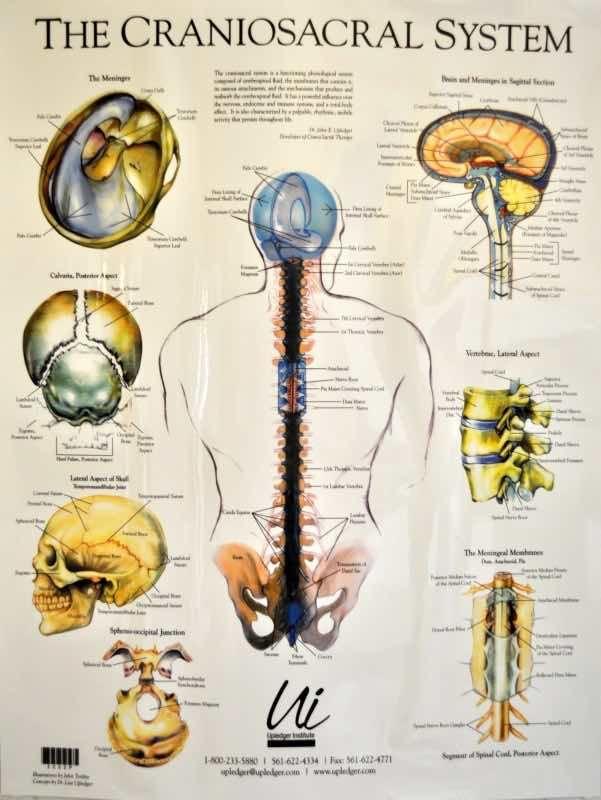 Kranioszakralis rendszer