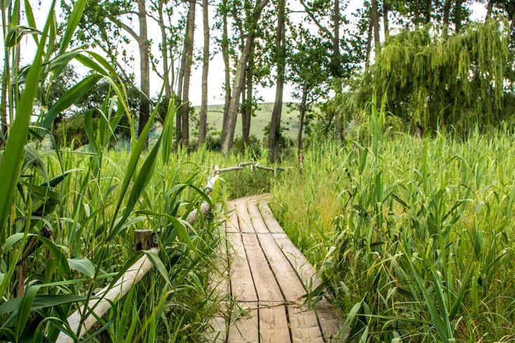 A long boardwalk leads toward three different bird hides along the Wakkerstroom wetland.