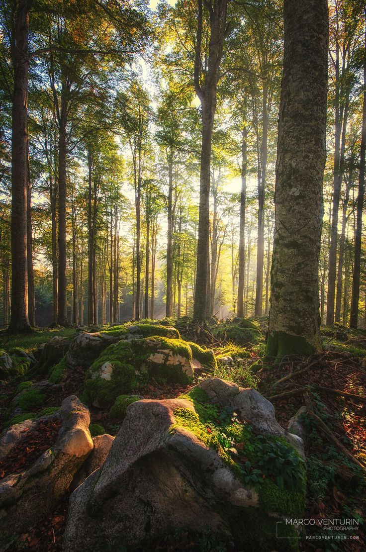 Back in the forest by Marco Venturin on 500px