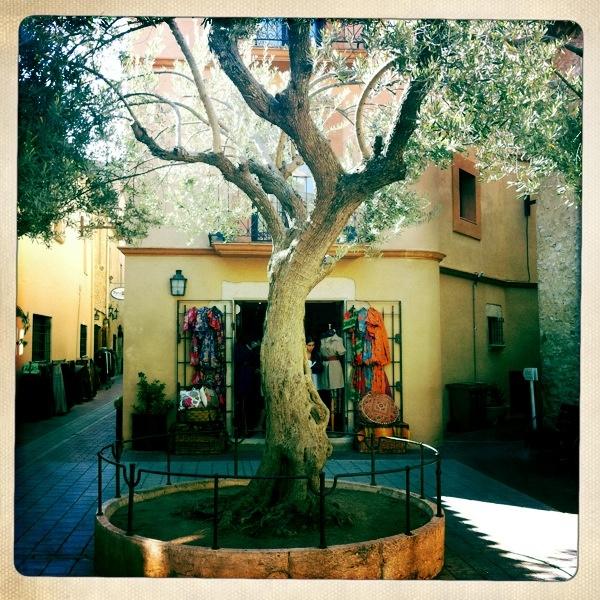 Tree, Begur Spain