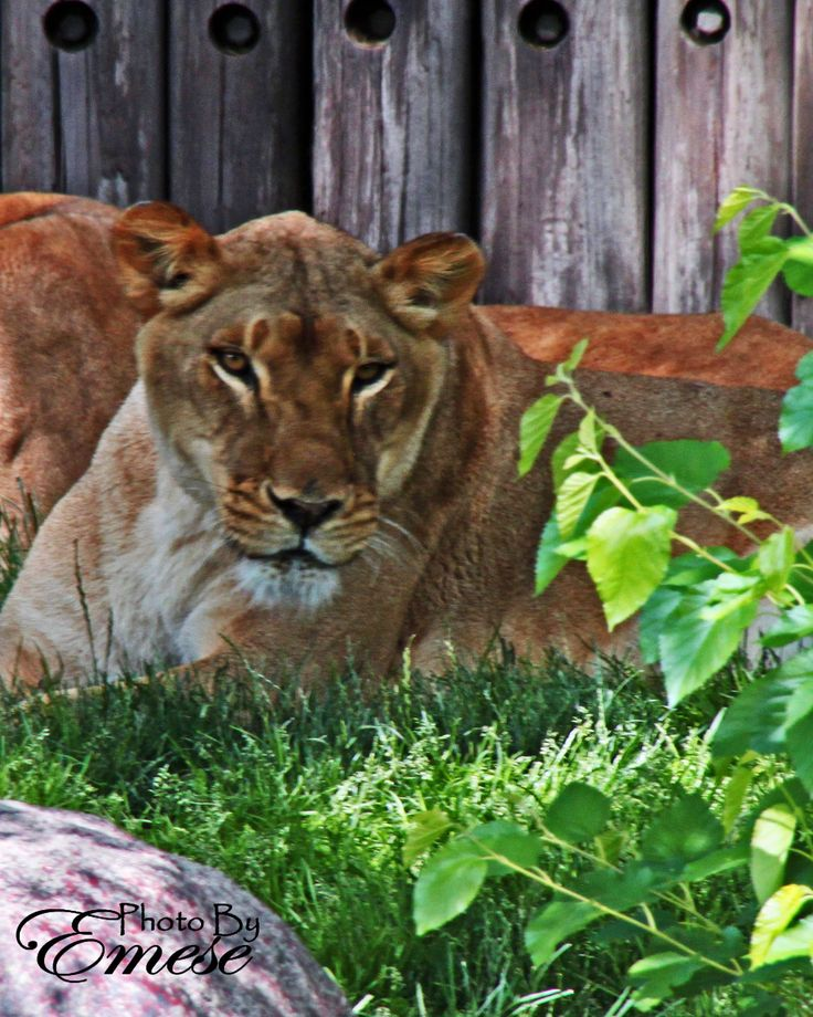 cleveland metroparks zoo open memorial day