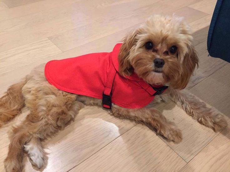 Miss Bella in our latest dog coat!