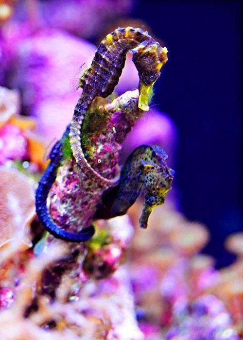 colored sea horse