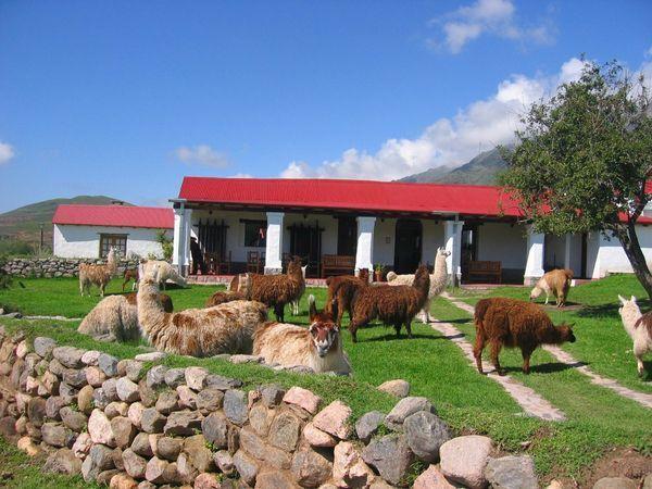 """Estancia """"Las Carreras"""" Tucumán -Argentina"""