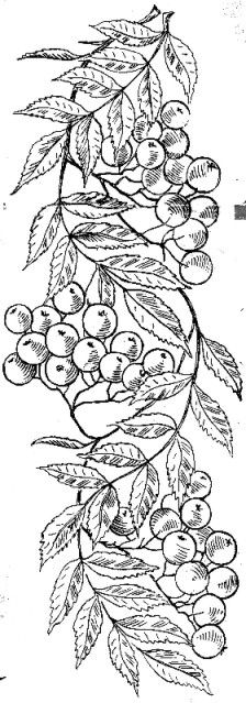 черно-белая графика - anisol - Photo.Qip.ru / id: fvax