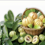 Necessary Instructions For The Garcinia Cambogia Extract Users