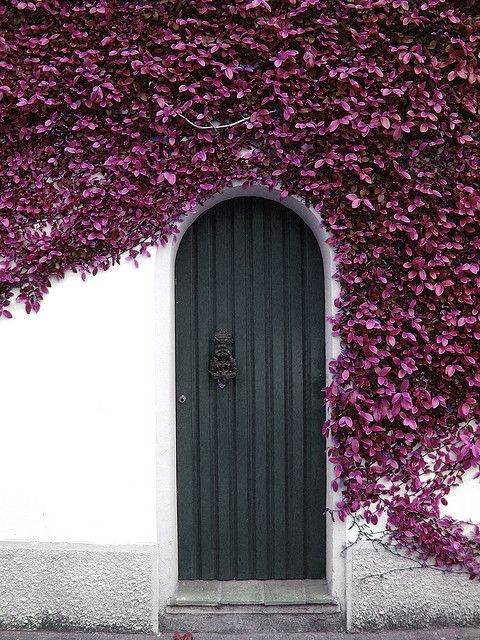 I love the beautiful purple flowers surrounding the lovely blue door.