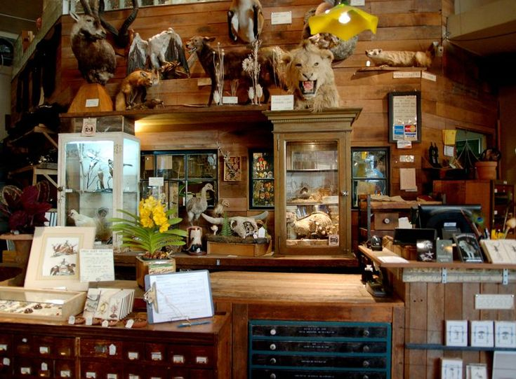 Paxton Gate: Shops Rights, Paxton Gates San Francisco, Natural History, Display In Curio Cabinets, Google Search, Curious Expedition, Gates Shops, Botanical Bewitch, Photo