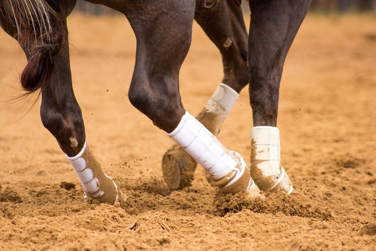 Iconoclast Orthopedic Horse Support Boots Review