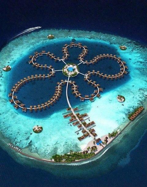 Ocean Flower, Maldives (Indian Ocean).  ASPEN CREEK TRAVEL - karen@aspencreektravel.com