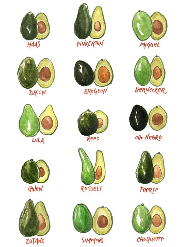 Bet you didn't know there were so many varieties of avocados!  You can find maybe three or four kinds in the Houston area, but I think the Bacon avocado is a particularly delicious name...