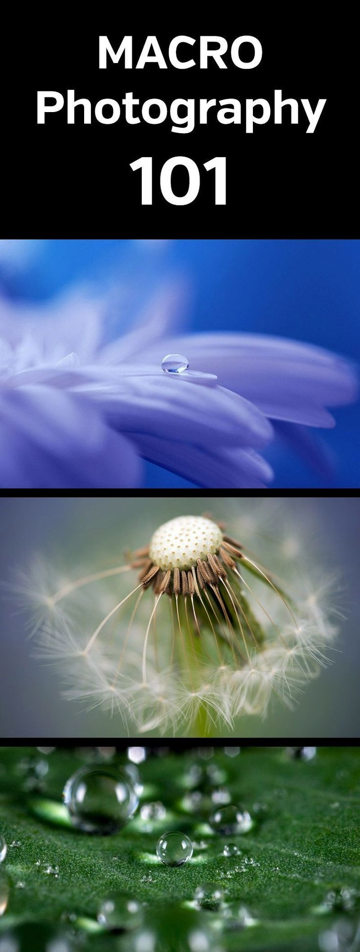 Macro Photography 101. Intro to macro photography and how to get amazing close up photos. Flowers, insects, rain drops, micro, mini, lens, gear, tips, article, tutorial, guide #macrophotography #photographytips #photography