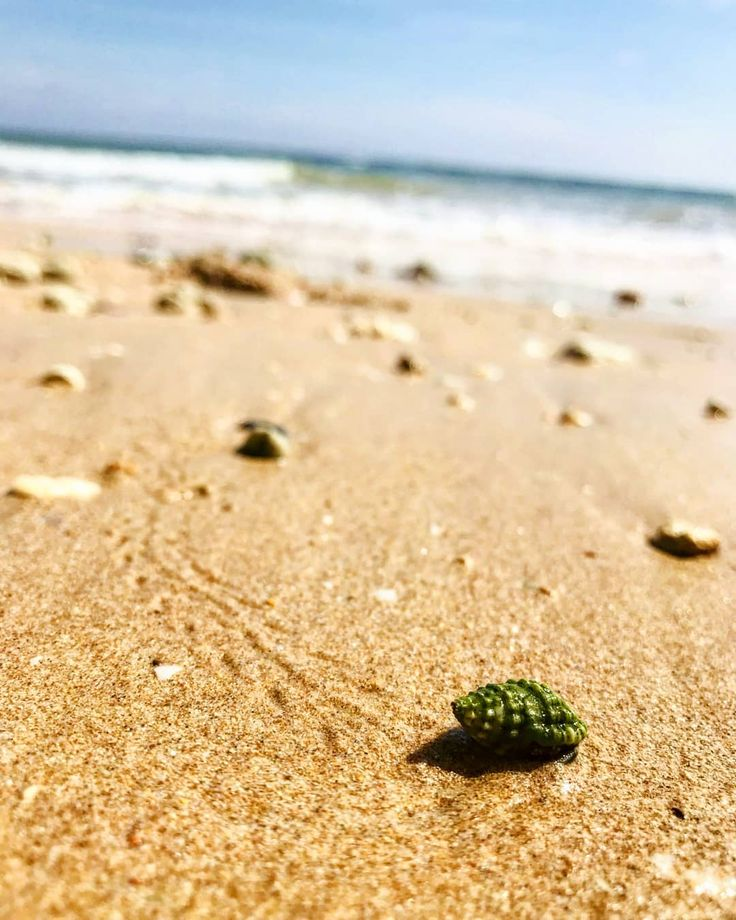 The tiny hermit crab has an important message for you human. - - Quit the drama and go green stupid! . . . . . . . . #phoneshot #hermitcrab #crablife #green #beach #vibe #goldensands #therapy #indianocean #gogreen #wildlife  #exploremore #coloursintravel #lpinstatakeover #natgeocreative #natgeoyourshot #natgeowild #natgeotraveler #photographers_of_india #indiagram #instagram #betweenlatitudes #indiaclicks #earth_shotz #roamtheplanet #theworldshotz #beautiful #natureaddict #wanderlust