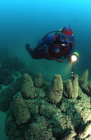 8 best DIVING!!!! images on Pinterest   Snorkeling, Diving and Scuba ...