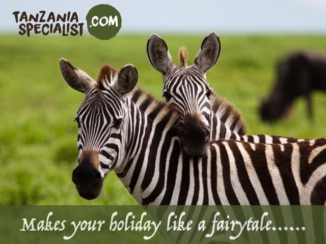 Amuse the great Tanzania migration safari and see the wildebeest and zebra migration in Serengeti national park and the best time for visiting Serengeti national park is from October to July month. An awesome experience can be gained by having a look of herds of animals with their several activities.