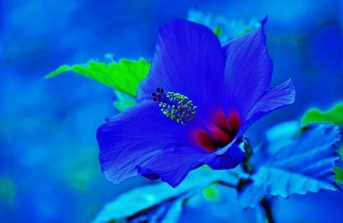 Meine lieblingsfarbe Die Blume blaue Edition Nr.: 01 Erfolgs-Webseite: http://www.top-geheimnisse.de