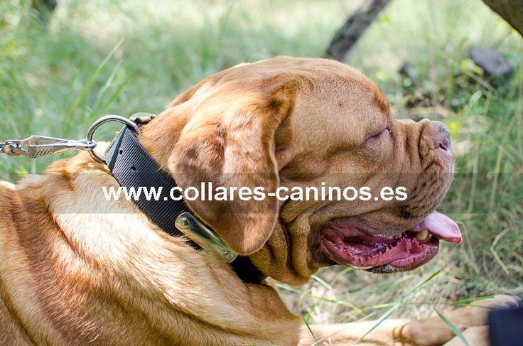Collar de adiestramiento nailon con chapa identificación para perros Dogo de Burdeos - C42 (40 mm)