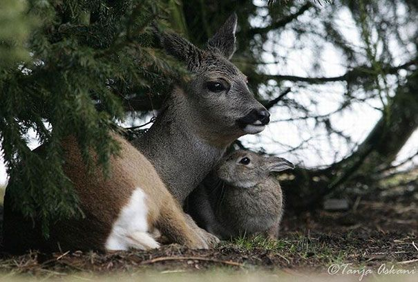 Bambi and Thumper!!!