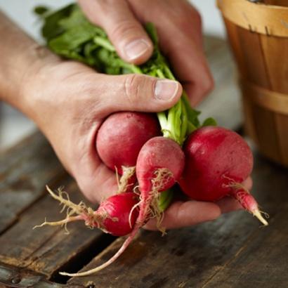 Radijs is een kruidachtig gewas met kleine, rode knolletjes met of zonder blad. Radijs is knapperig en vrij pittig van smaak. Daarom heerlijk om zowel als gezond tussendoortje op te eten, of in een salade of op de boterham. Als in een roerbakschotel of bij een heerlijk vlees- of visgerecht. Radijs is jaarrond uit Nederland verkrijgbaar.