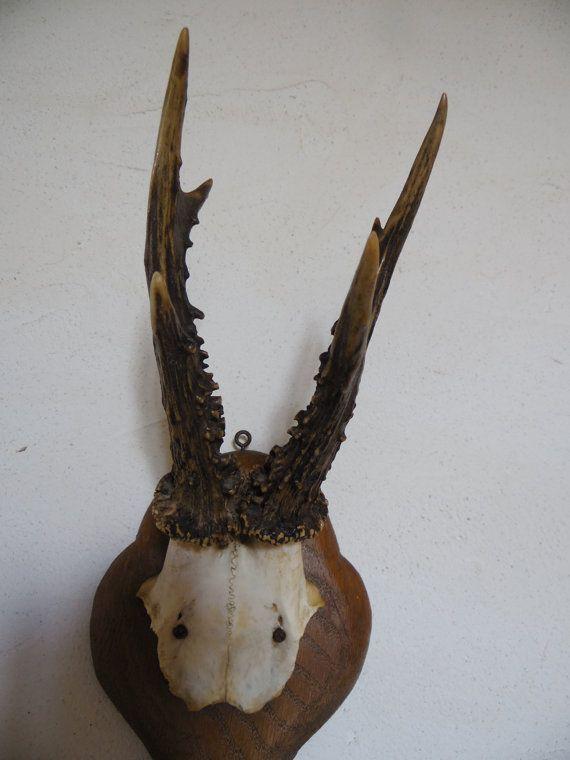 17 meilleures id es propos de chasse chevreuil sur - Tete de chevreuil decoration ...