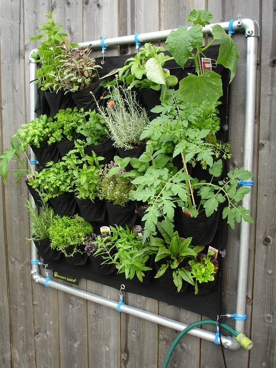 This small vertical nursery features plenty of tiny plants peeking out of their designated pockets. This is a cute way to make sure you have your fresh herbs even if you don't have the garden space to do so. The pockets contain all the nutrients these tiny plants would need and they are absolutely adorable to look at. This would look perfect in a kitchen area.