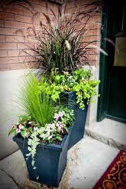 Image result for front door plants