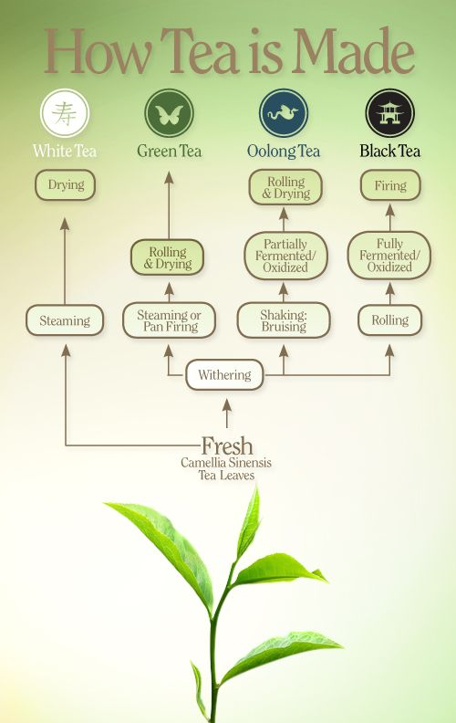 How tea in made - tea infographic