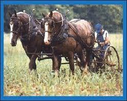 Resultado de imagem para cavalo de tração