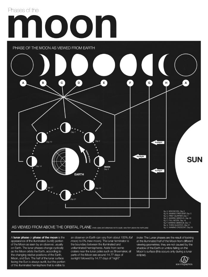 Phases of the Moon infographic by Nick Wiinikka
