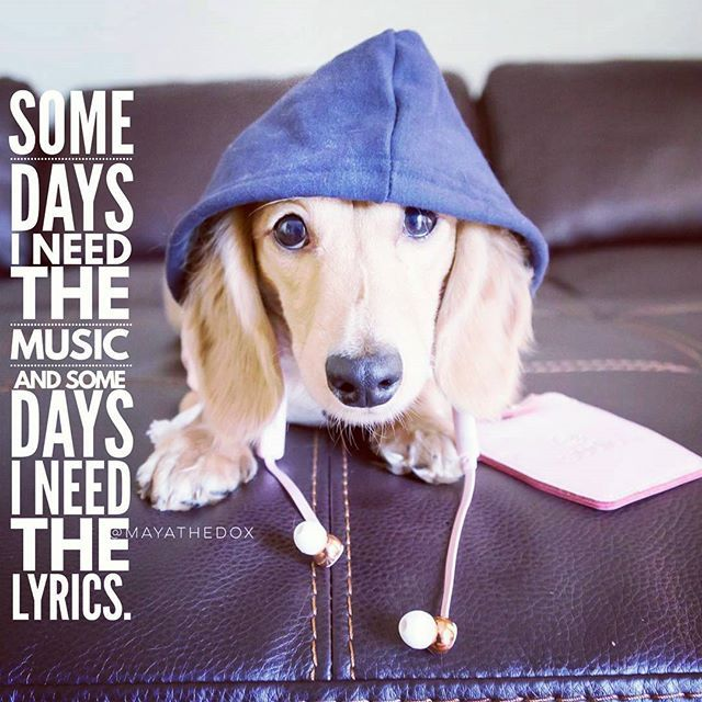 So true ... .  @mayathedox . . #dogsofinstagram
